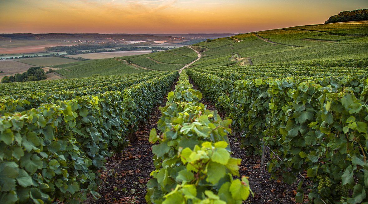 view of vineyards with fields, lake and hills in the distance at sunset