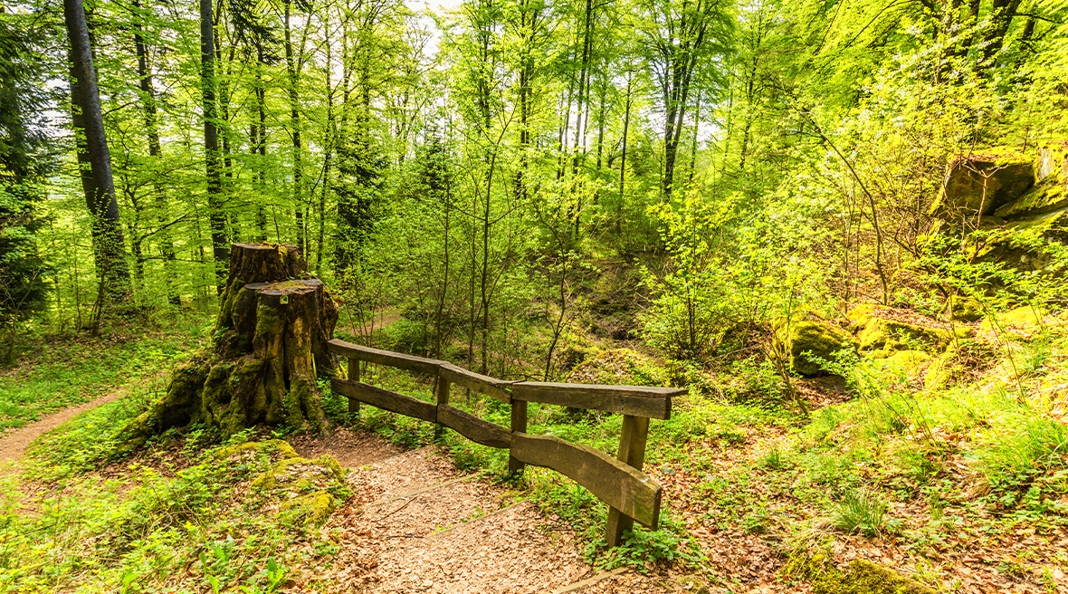 Forest trail in the spring forest landscape within the area of millstone and ice caves in volcanic Eifel