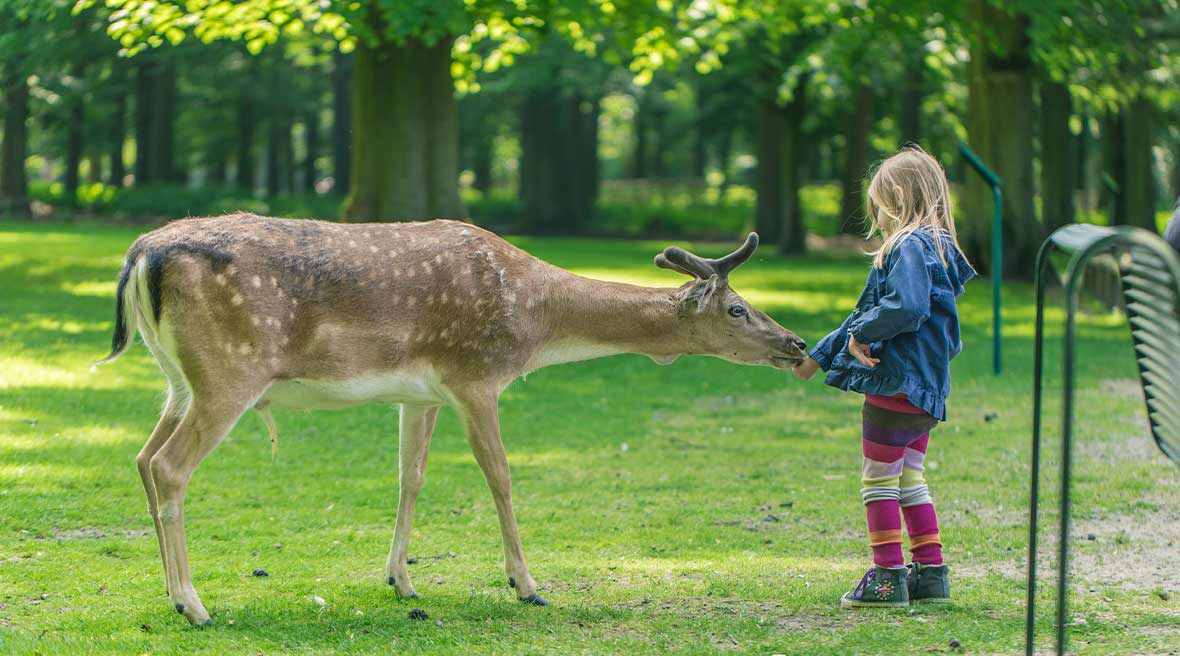 Green field and trees with a little girl feeding a large deer