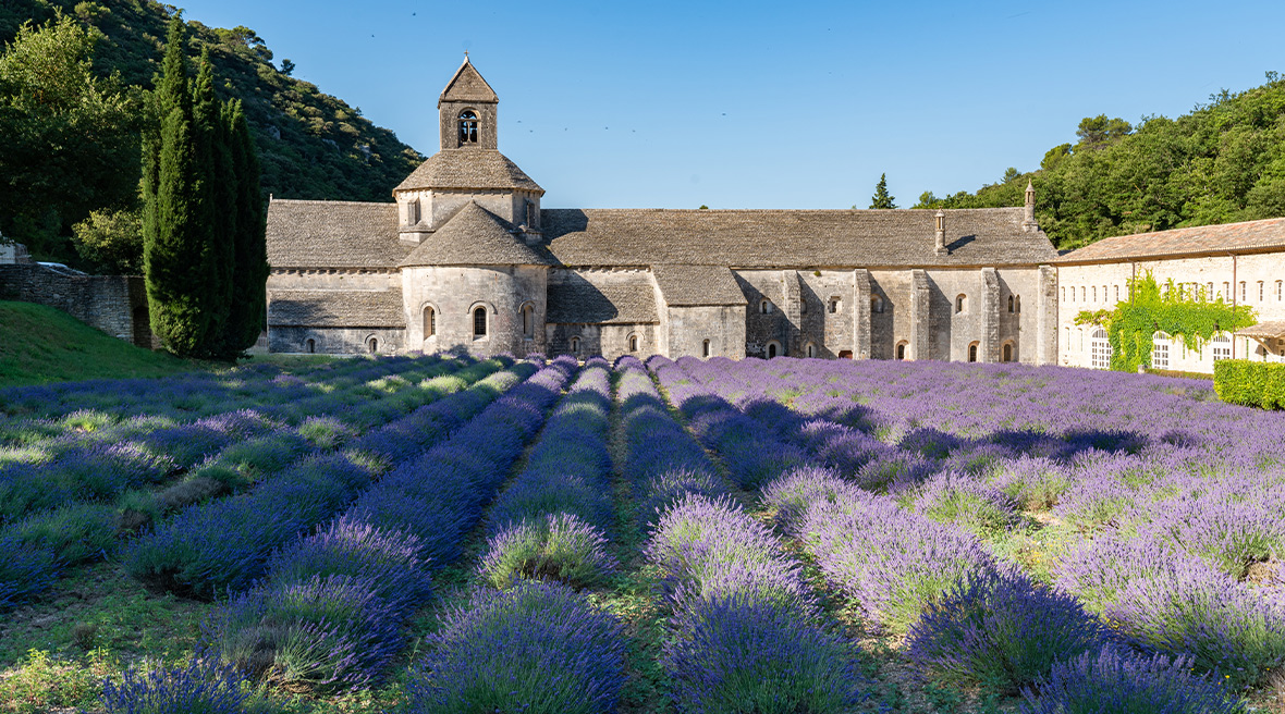 The lavender field at Sénanque Abbey