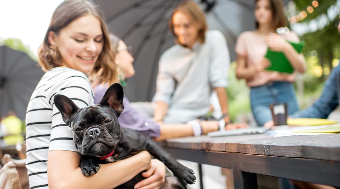 Black French bulldog in the arms of its smiling owner enjoying camping
