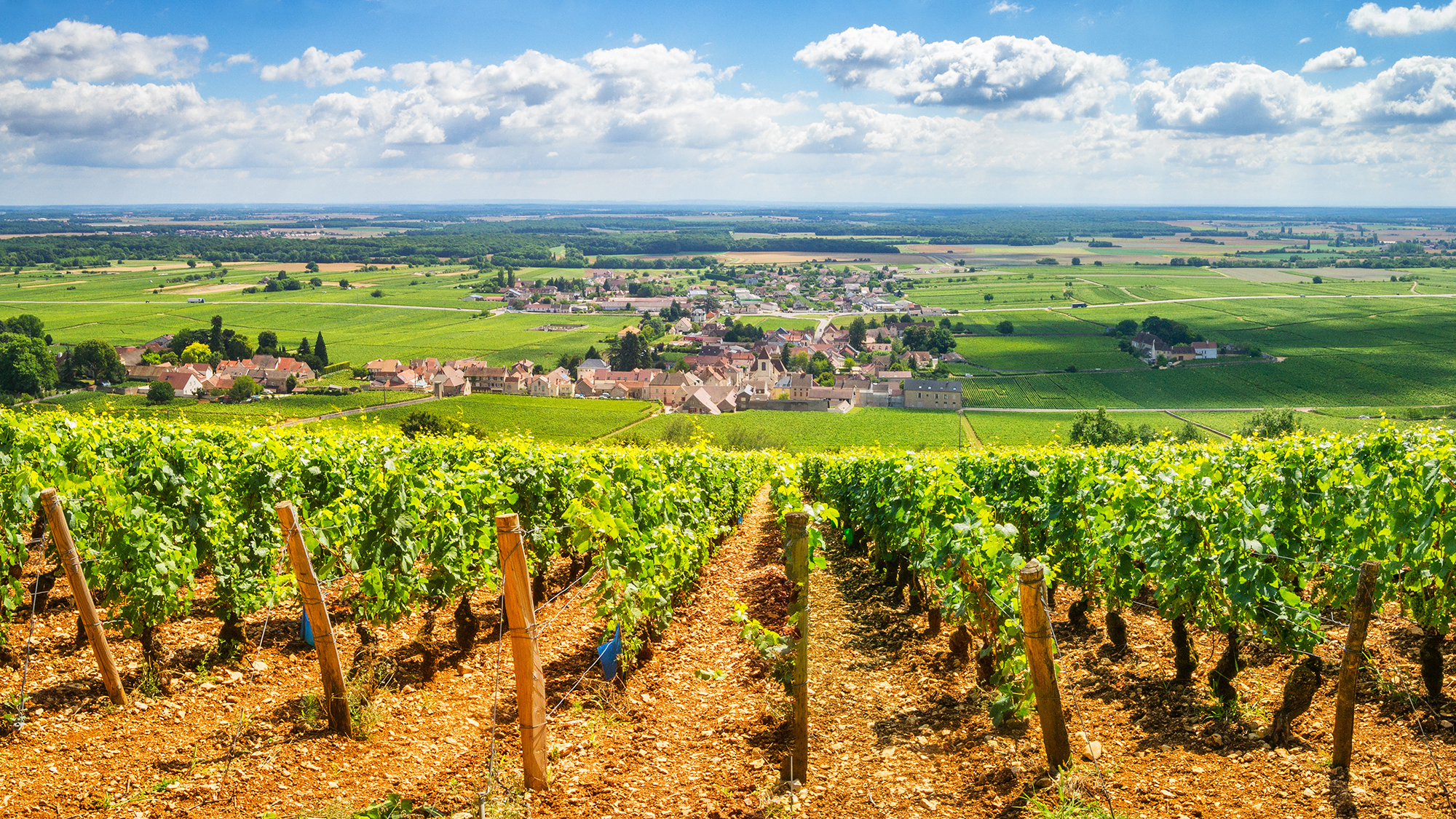 Vineyards with stretch of French countryside below under blue skies