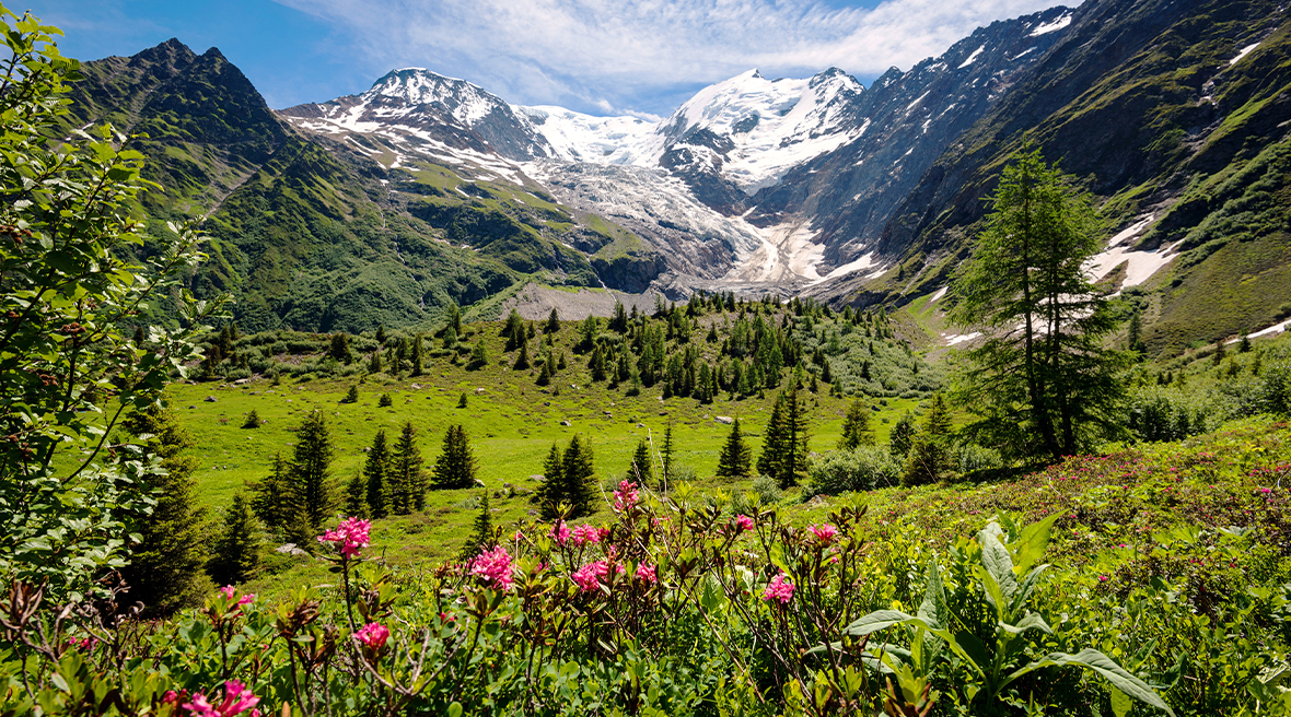 Wild flowers on sunny mountainside with snowcapped peaks in the distance