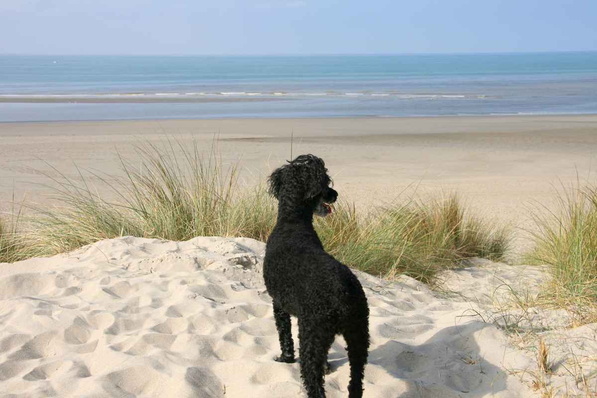 A black dog looks at an empty beach in Le Touquet