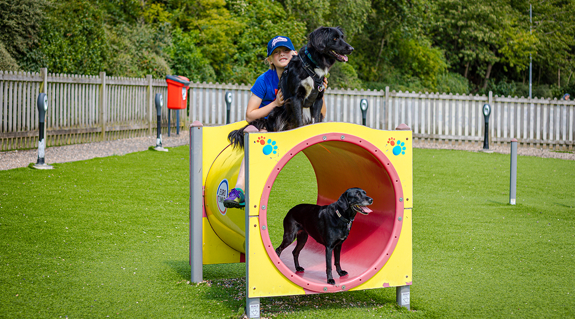 Yellow and red tube in a grass fenced area with two black dogs and a little boy