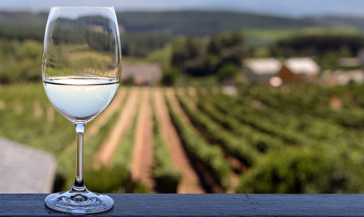 Close up of glass of white wine blurred vineyard background