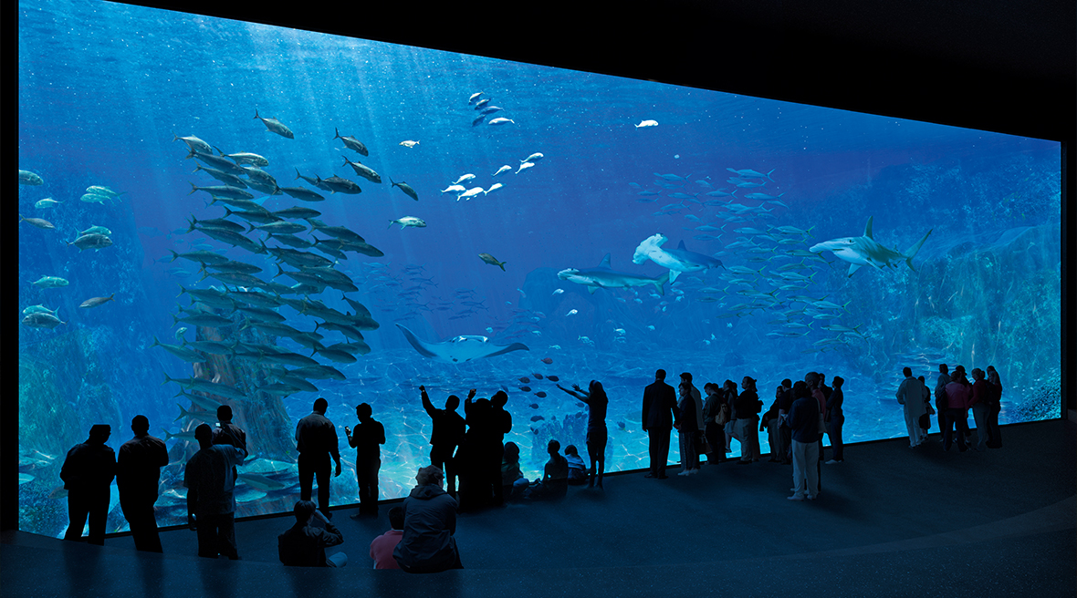 A large aquarium tank looking in to fish, hammerhead sharks and other sea life. Located within Nausicaá aquarium in Northern France