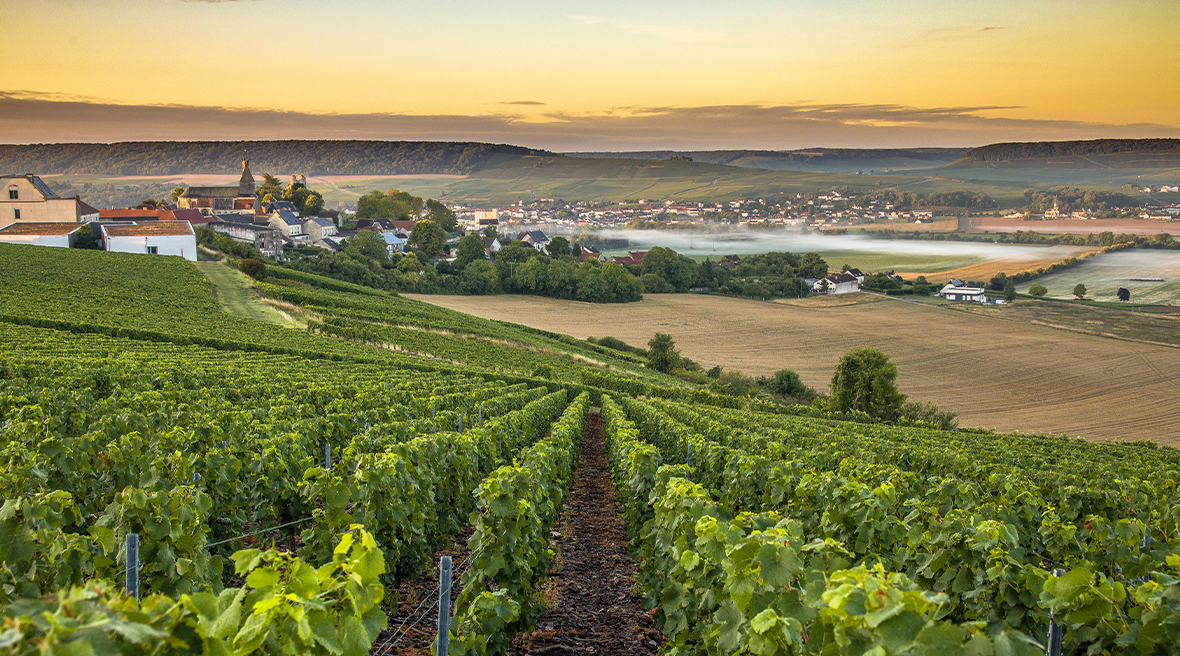 Landscape of vines and villages in the Champagne region