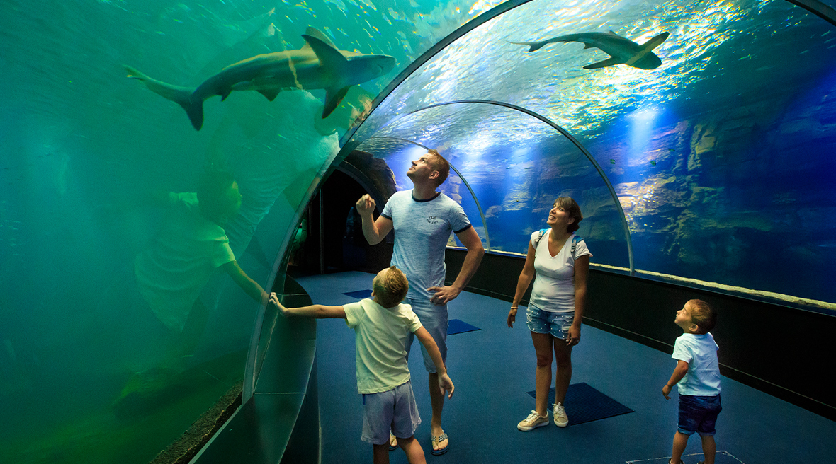 Fully immerse yourself in the 18-metre long tunnel