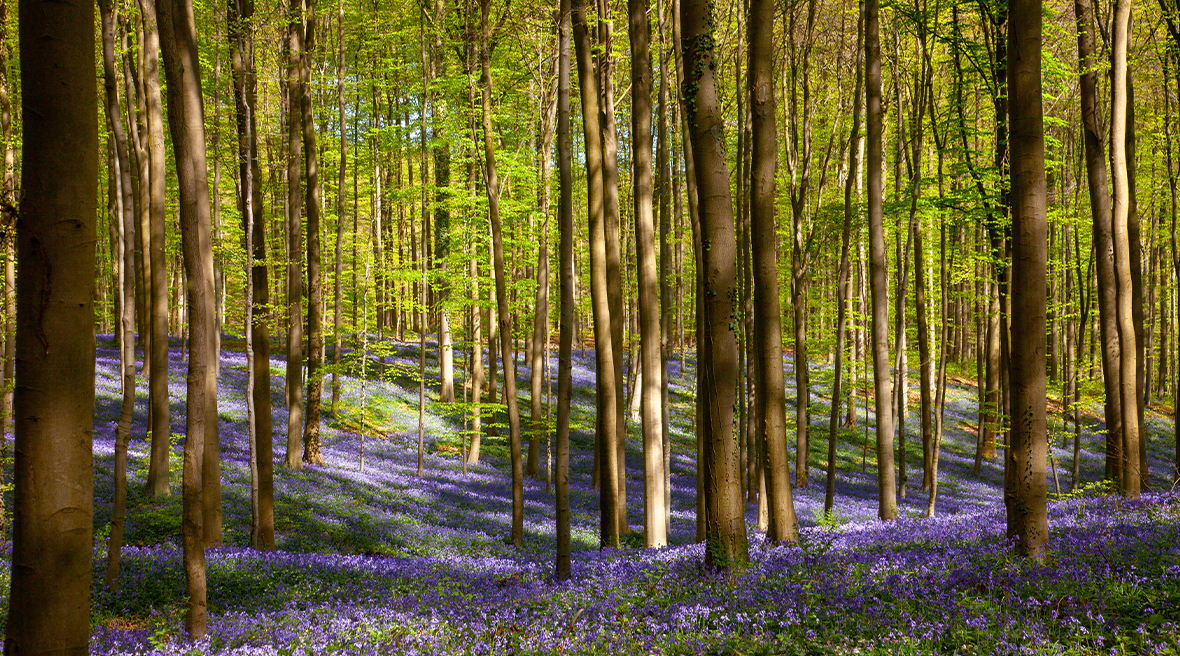 Wander among the bluebells and capture nature at its finest