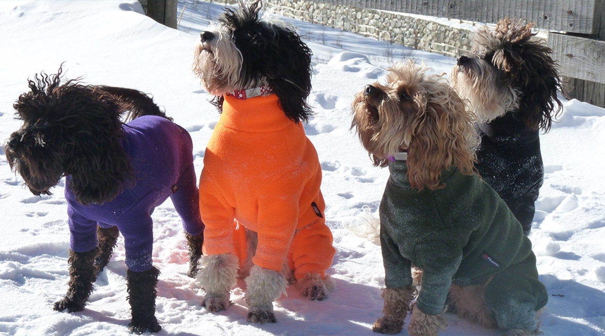 four small fluffy dogs in the snow all wearing brightly coloured warm jumpers