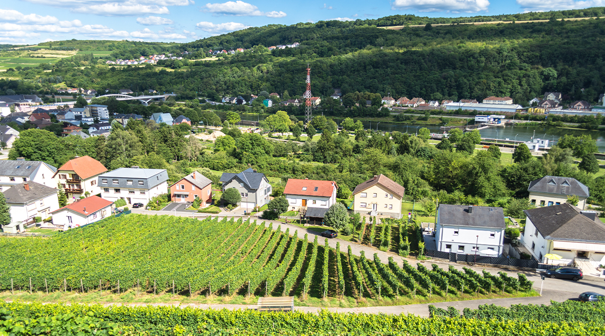 Vineyards along the Moselle river in the countryside of Luxembourg