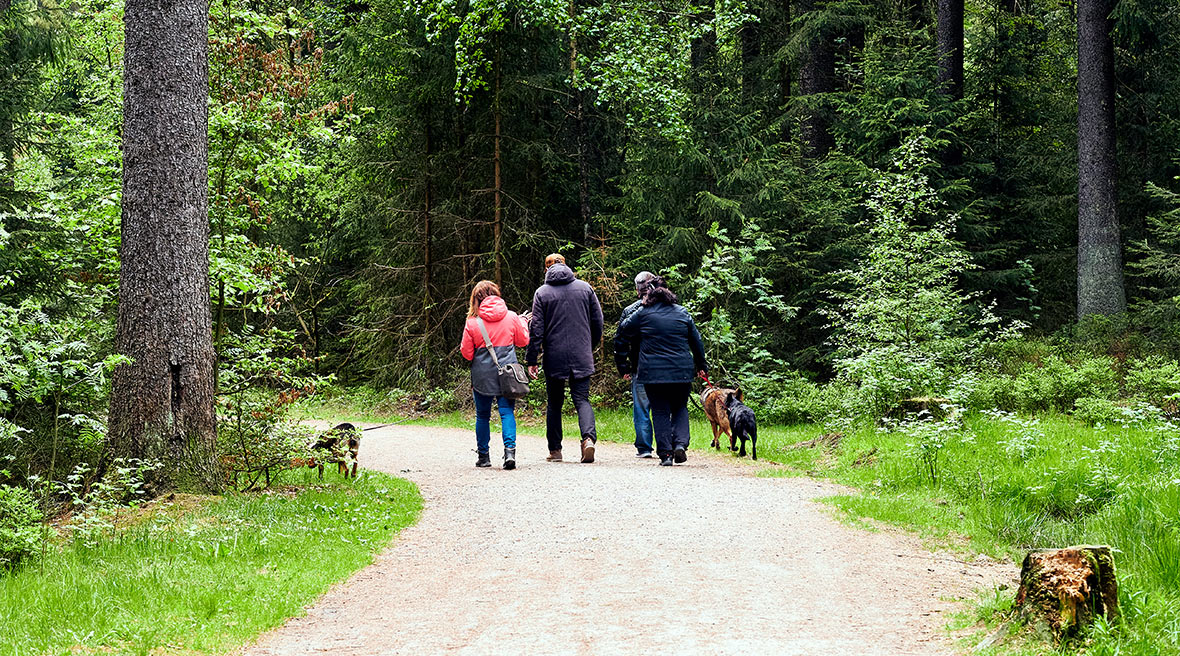 Multi generation family walking in a line past a trees in a forest with three dogs